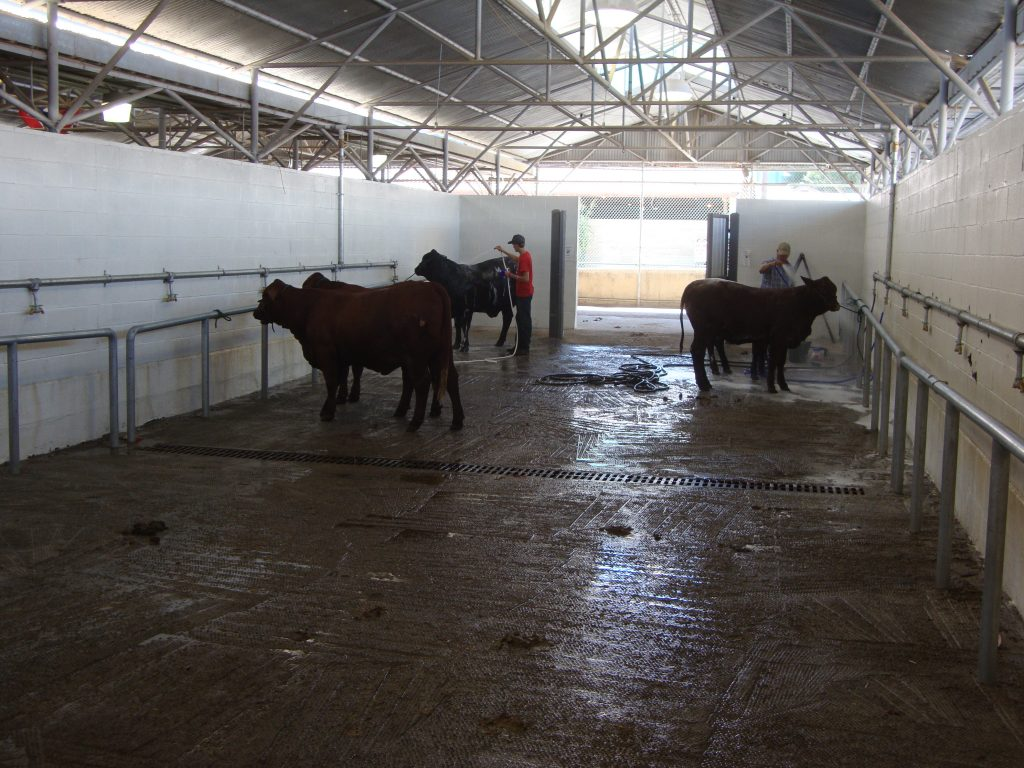 Texas_State_Fair_cattle-barn6
